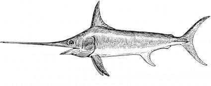 free vector Swordfish