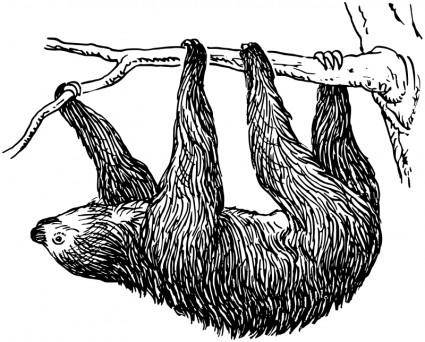 free vector Sloth