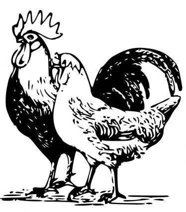 free vector Poultry 3