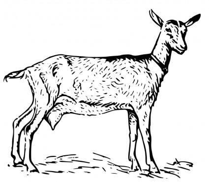 free vector Goat 2