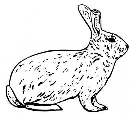 free vector French rabbit