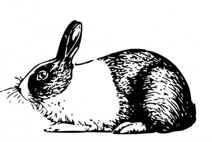 free vector Holland rabbit