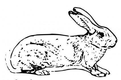 free vector Belgian rabbit