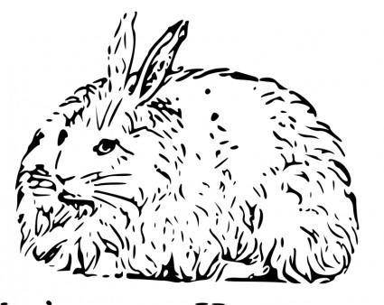free vector Angora rabbit