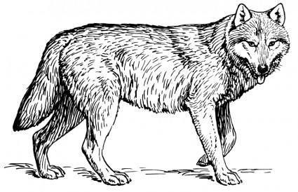 Wolf 1 100208