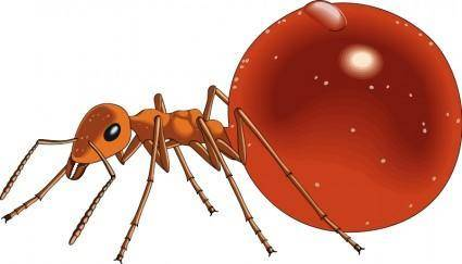 free vector Insect 21