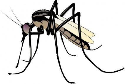 free vector Insect 06