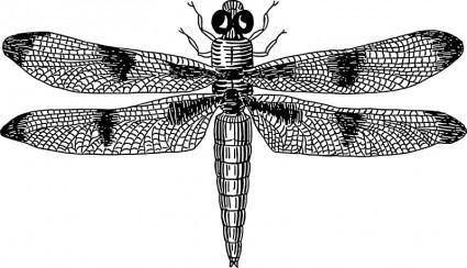 free vector Dragonfly