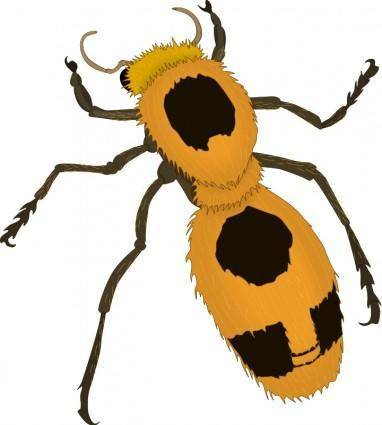 free vector Insect 23