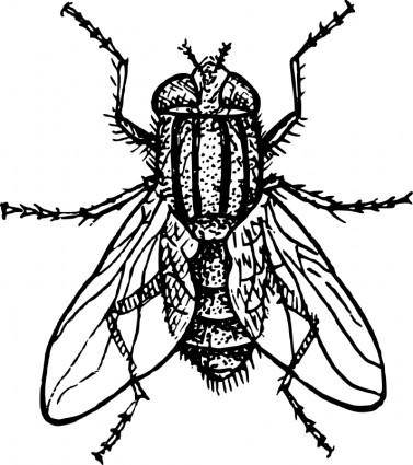 free vector House fly