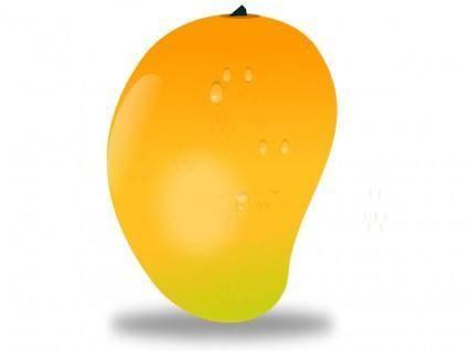 free vector Mango fruit