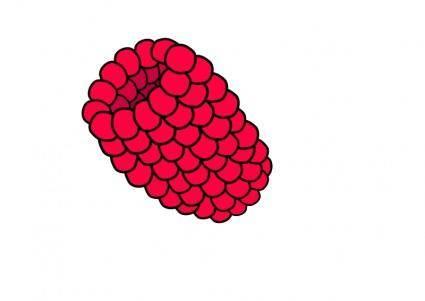 free vector Red Raspberry