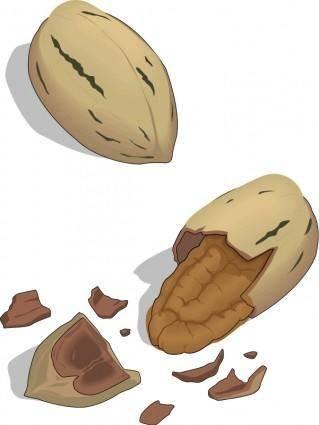 Nut 03