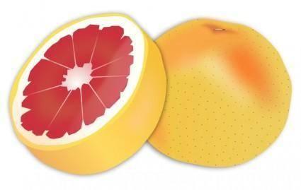 free vector Grapefruit
