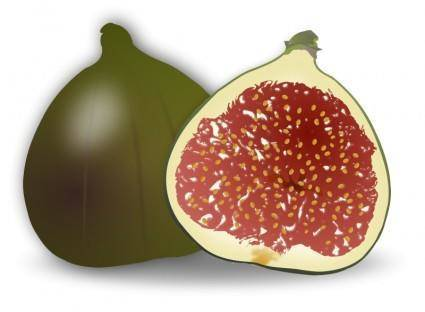 free vector Fig Fruit
