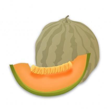 free vector Musk Melon