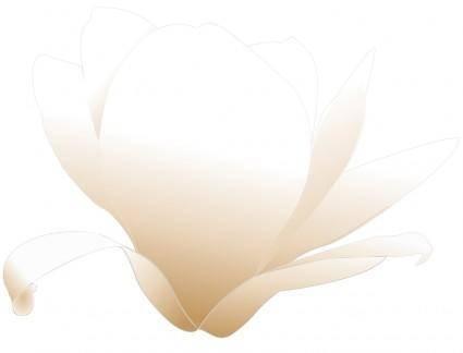 Magnolia white patricia 03r