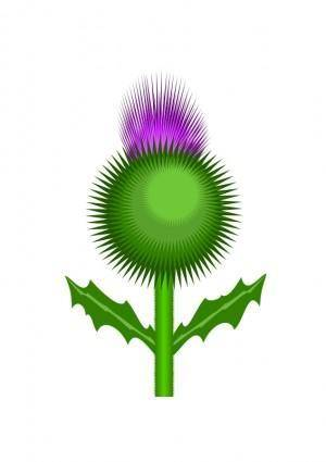 free vector Scottish Thistle