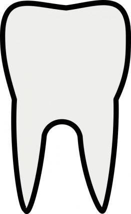 free vector Tooth Line Art