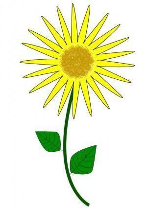 free vector Flower, Sunflower
