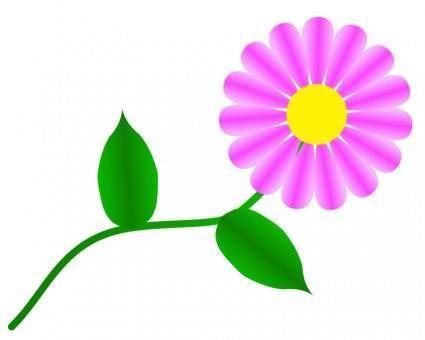 Daisy Fuchsia