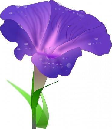 free vector Morning glory