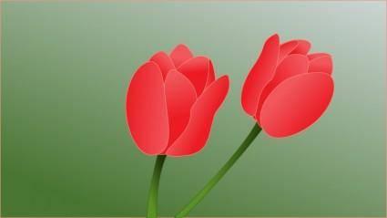 free vector Tulip