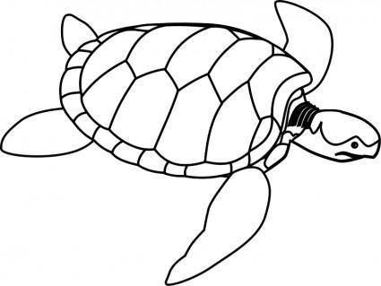 Green sea turtle line art