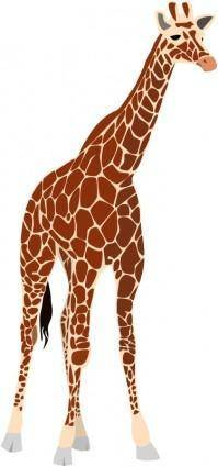free vector Another giraffe