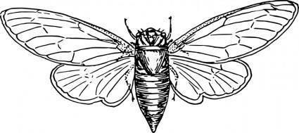 free vector Locust