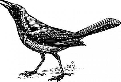 free vector Grackle