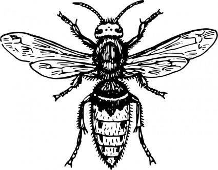 free vector Hornet
