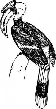 free vector Hornbill
