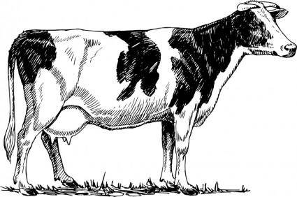 free vector Holstein cow
