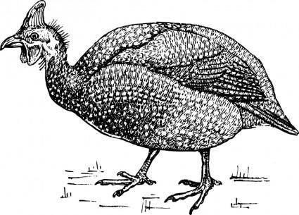 free vector Guinea fowl