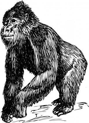 free vector Gorilla