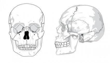 Human Skull No Text No Color clip art