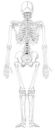 Human Skeleton Back No Text No Color clip art