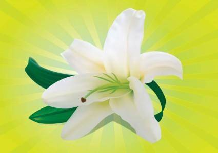 free vector White Orchid