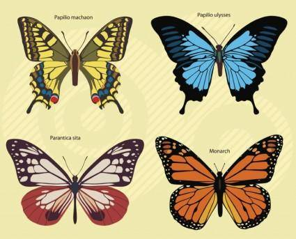 free vector Butterflies Footage