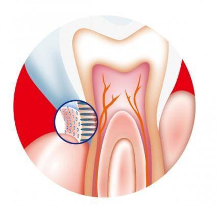 Tooth internal vector