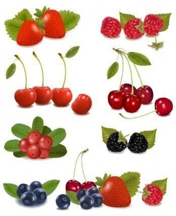 Delicious fruit 01 vector
