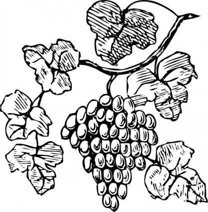 Grapes clip art