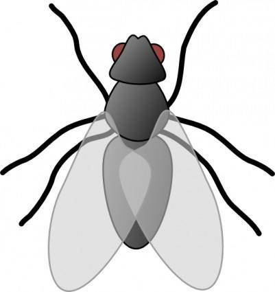 Fly Bug Insect clip art
