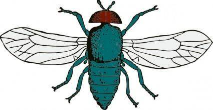 Blue Bottle Fly clip art