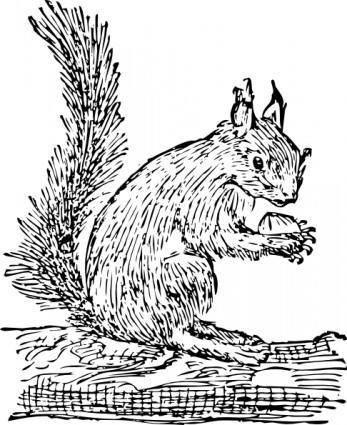 Squirrel clip art