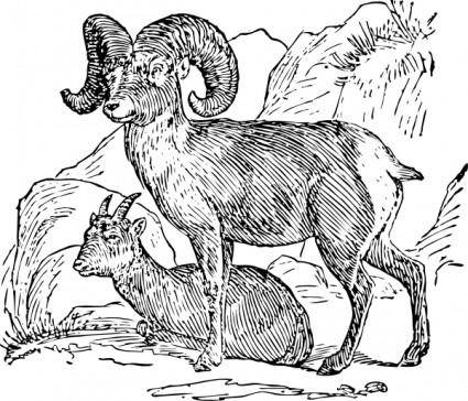 free vector Bighorn Sheep clip art