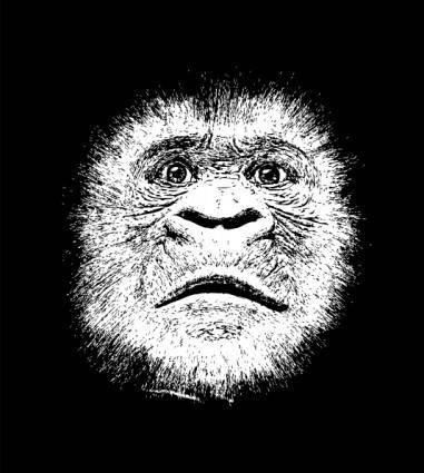 Gorillaface clip art