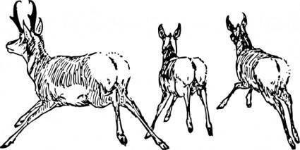 Running Antelope clip art