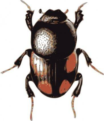 free vector Insect Beetle clip art